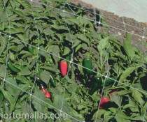HORTOMALLAS crop-netting-with-jalapenos-peppers